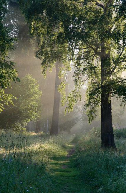 natuur pad